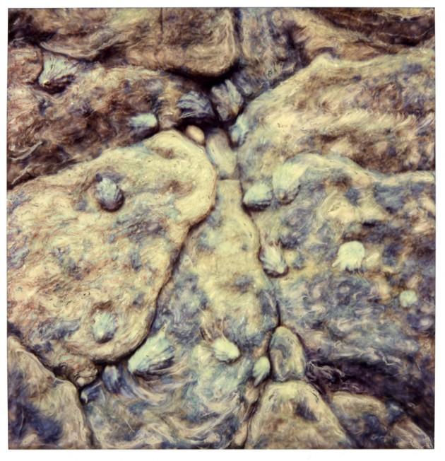 Barnacle Rocks
