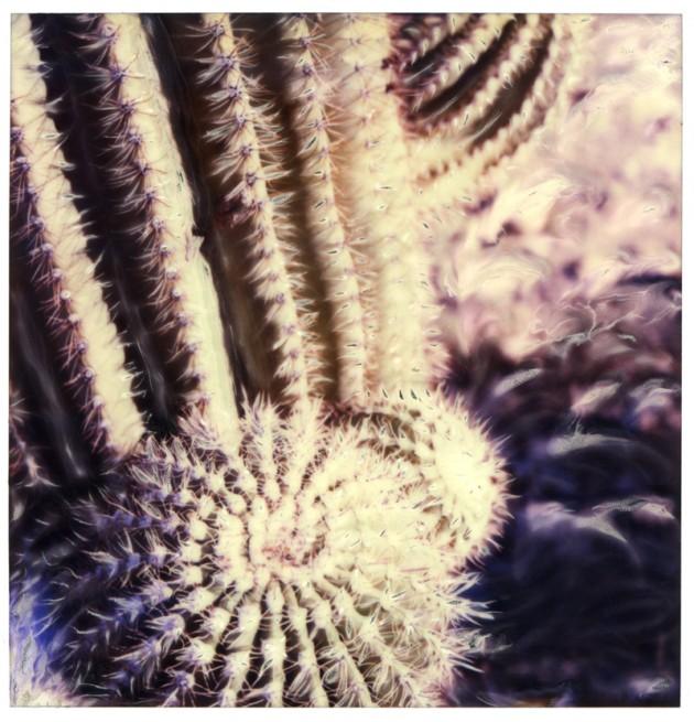 Saguaro Budding