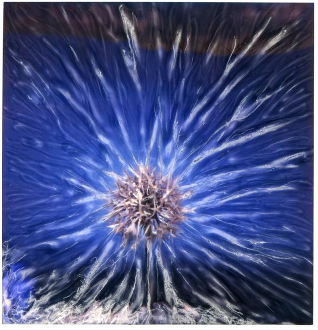 Starflower 2