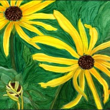 BlackEyed Susans800s